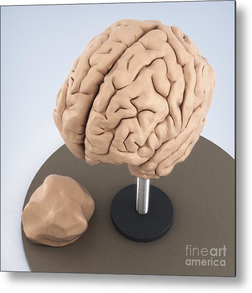 Digital Illustration Metal Print Featuring The Photograph Clay Model Of Brain By Science Picture Co