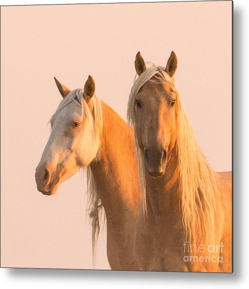 Colorado Metal Print featuring the photograph Corona And Cheyenne At Dawn by Carol Walker