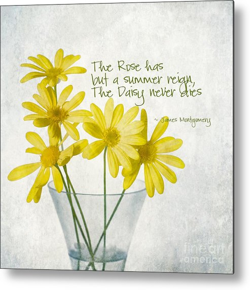 Daisy Metal Print featuring the photograph Daisies by Peggy Hughes