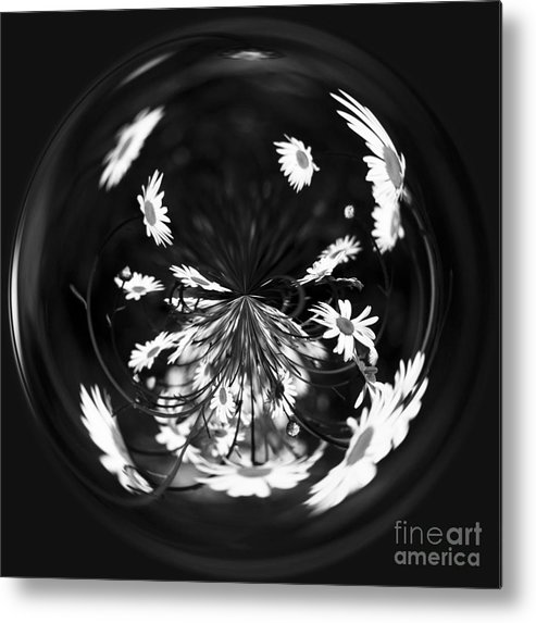 Asteraceae Metal Print featuring the photograph Daisy Globe by Anne Gilbert