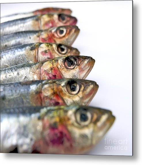 Animal Body Part Metal Print featuring the photograph Fishes by Bernard Jaubert