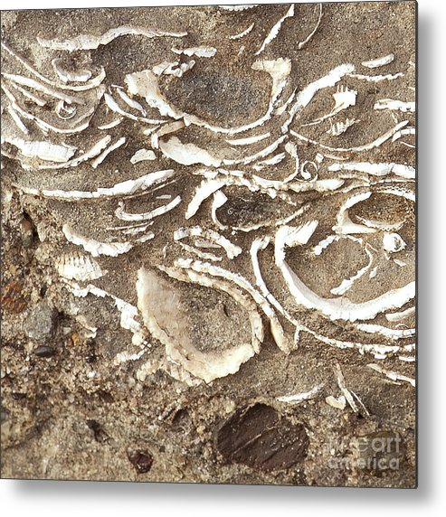 Fossils Metal Print featuring the photograph Fossils Layered In Sand And Rock by Artist and Photographer Laura Wrede