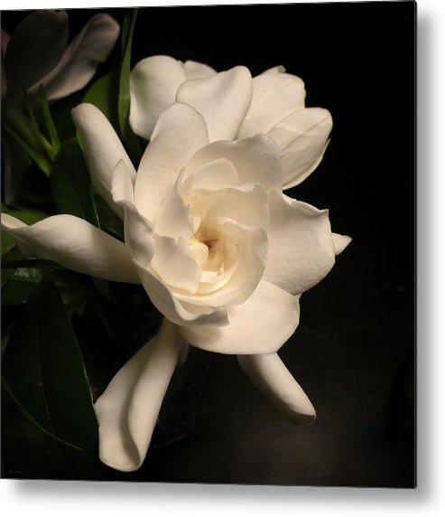 Flower Metal Print featuring the photograph Gardenia Blossom by Deborah Smith