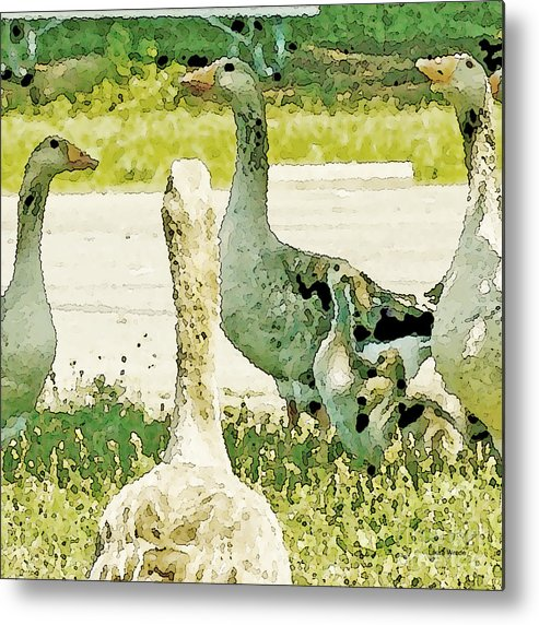 Geese Metal Print featuring the photograph Goose Chat by Artist and Photographer Laura Wrede