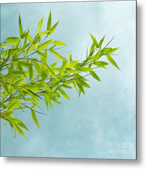Bamboo Metal Print featuring the photograph Green Bamboo by Priska Wettstein