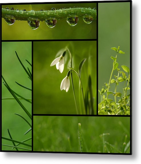 Organic Metal Print featuring the photograph Green by TouTouke A Y