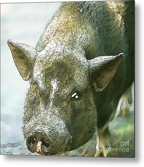 Pig Metal Print featuring the photograph Here's Woody by Artist and Photographer Laura Wrede