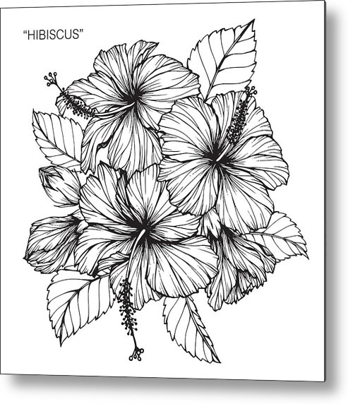 Hibiscus Flower Drawing Metal Print By 13914901