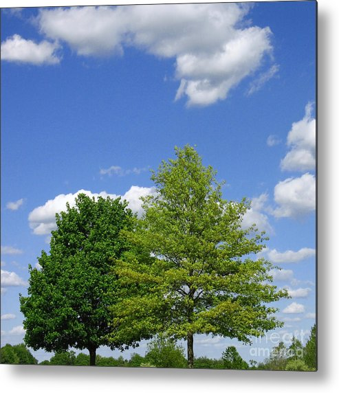 Trees Metal Print featuring the photograph Hilltop Trees by Ann Horn