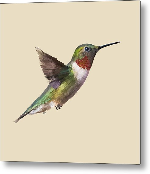 Feathers Metal Print featuring the digital art Humming Bird by Paul Freidlund