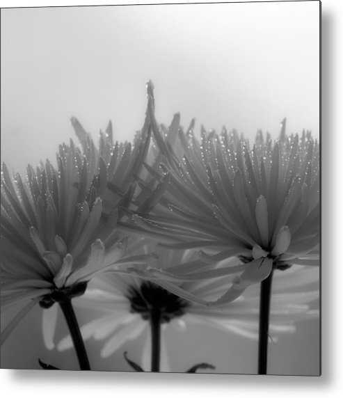 Flowers Metal Print featuring the photograph Intimacy by Tom Druin