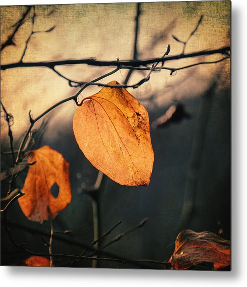 Leaf Metal Print featuring the photograph Last Leaves by Taylan Apukovska