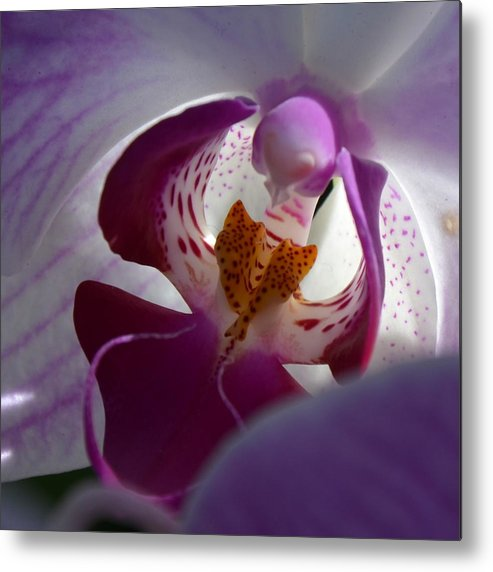 Orchid Metal Print featuring the photograph Lavendar World by AnnaJo Vahle