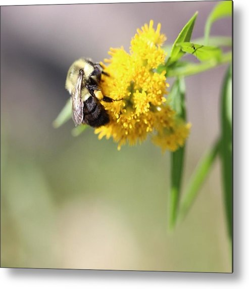 Metal Print featuring the photograph Nectar by Marie-Claude Charron