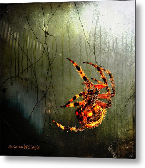 Spider Metal Print featuring the photograph Nightmares by Karen Slagle