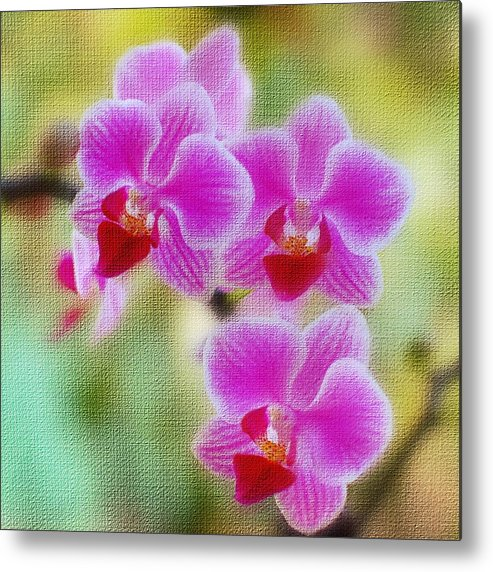 Flower Metal Print featuring the photograph Orchid by Paul Rohan