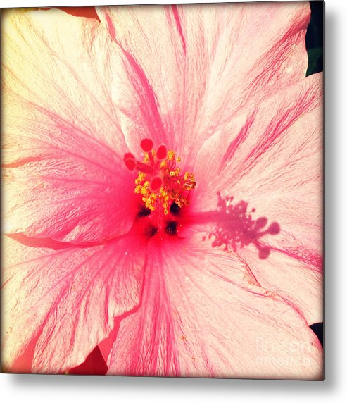 Florida Metal Print featuring the photograph Pink Hibiscus by Chris Andruskiewicz