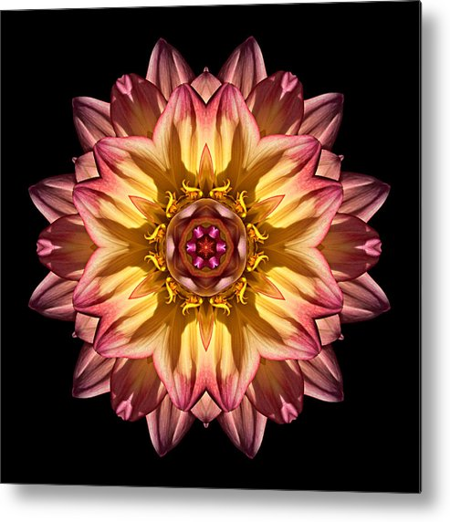 Flower Metal Print featuring the photograph Red And Yellow Dahlia Iv Flower Mandala by David J Bookbinder