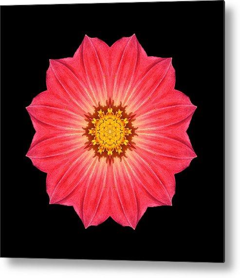Flower Metal Print featuring the photograph Red Dahlia Hybrid I Flower Mandala by David J Bookbinder