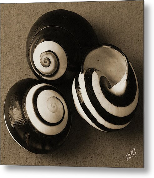 Seashell Metal Print featuring the photograph Seashells Spectacular No 27 by Ben and Raisa Gertsberg