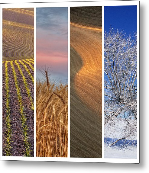 Usa Metal Print featuring the photograph Seasons Of The Palouse by Latah Trail Foundation