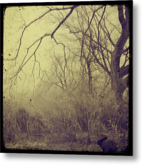 Nature Metal Print featuring the photograph Secret Garden by Gothicrow Images