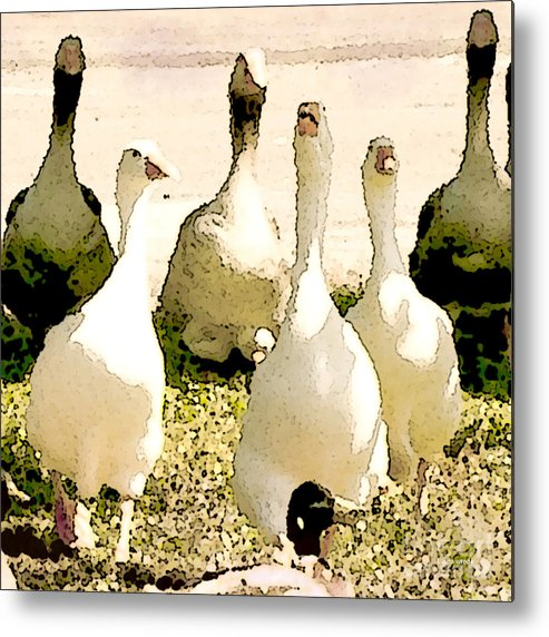 Geese Metal Print featuring the photograph Six Geese And A Duck by Artist and Photographer Laura Wrede