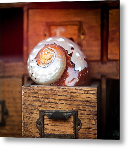 Snails Metal Print featuring the photograph Snail Shell by Art Block Collections