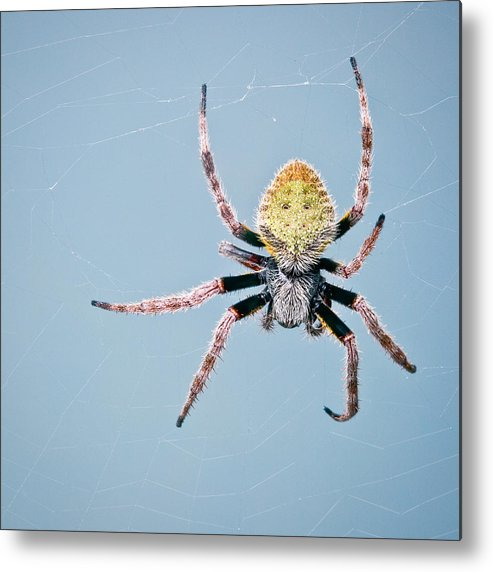 Spider Web Metal Print featuring the photograph Spider by Roberto Adrian