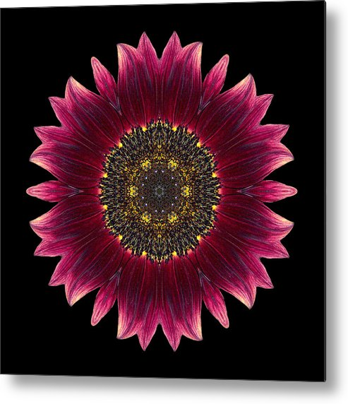 Flower Metal Print featuring the photograph Sunflower Moulin Rouge I Flower Mandala by David J Bookbinder