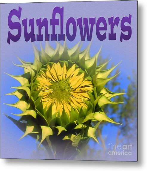 Sunflowers Metal Print featuring the photograph Sunflowers by Tina M Wenger