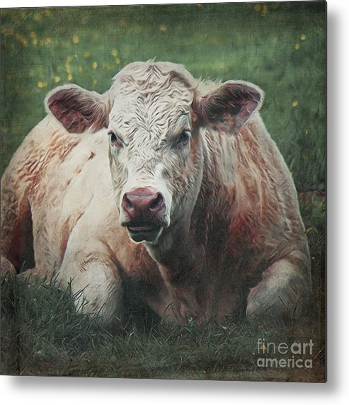 Cow Metal Print featuring the digital art The Cow by Angela Doelling AD DESIGN Photo and PhotoArt