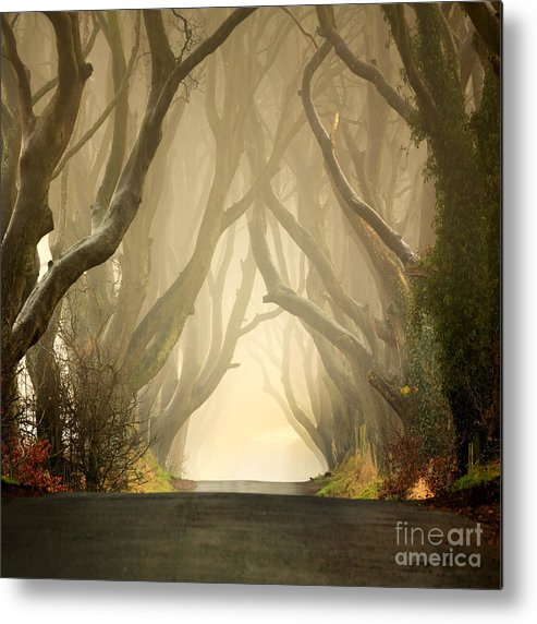 Beech Metal Print featuring the photograph The Dark Hedges 2011 by Pawel Klarecki