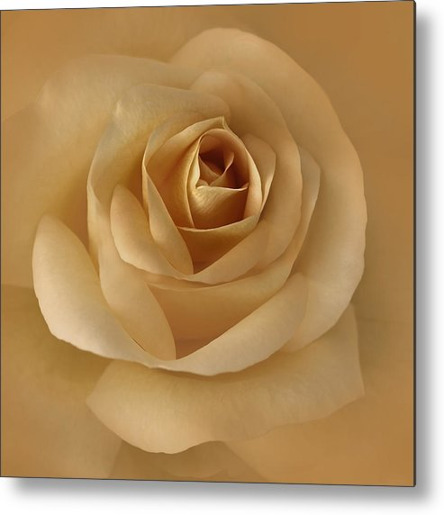 Rose Metal Print featuring the photograph The Golden Rose Flower by Jennie Marie Schell