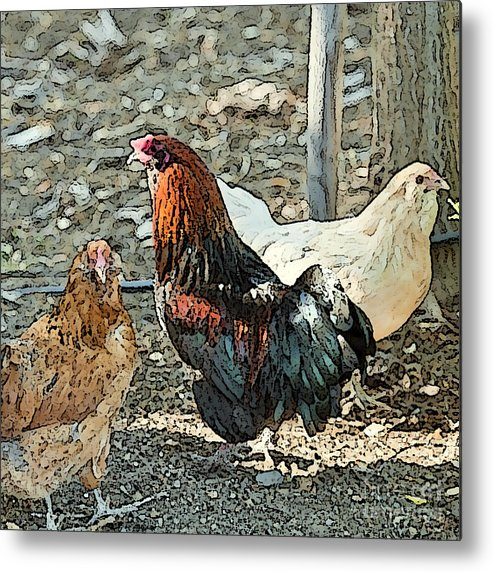 Rooster Art Metal Print featuring the photograph The Rooster And His Hens by Artist and Photographer Laura Wrede