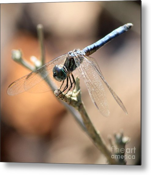Dragonfly Metal Print featuring the photograph Tired Dragonfly Square by Carol Groenen