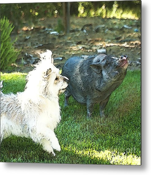 Pig Metal Print featuring the photograph Treats For Woody And Schnitzel by Artist and Photographer Laura Wrede