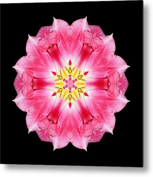 Flower Metal Print featuring the photograph Tulip Peach Blossom IIi Flower Mandala by David J Bookbinder