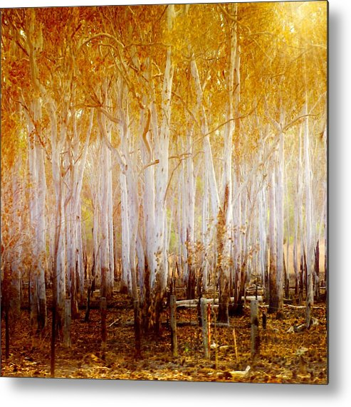 Landscapes Metal Print featuring the photograph Where The Sun Shines by Holly Kempe
