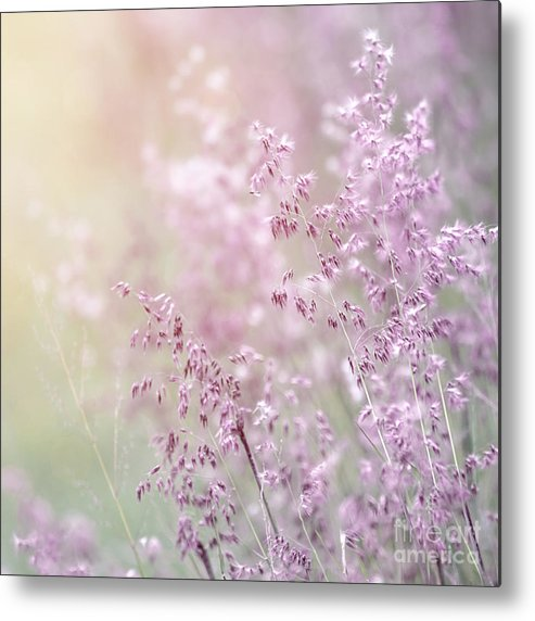 Abstract Metal Print featuring the photograph Wildflower Fine Art Background by Anna Om