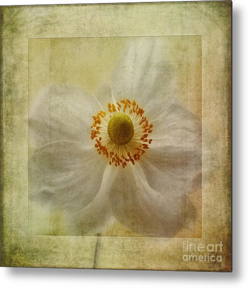 Japanese Windflower Metal Print featuring the photograph Windflower Textures by John Edwards