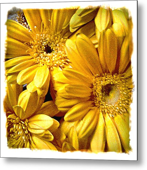 Floral Metal Print featuring the photograph Yellow Daisies by Doug Heslep