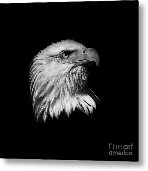 Black And White Metal Print featuring the photograph Black And White American Eagle by Steve McKinzie