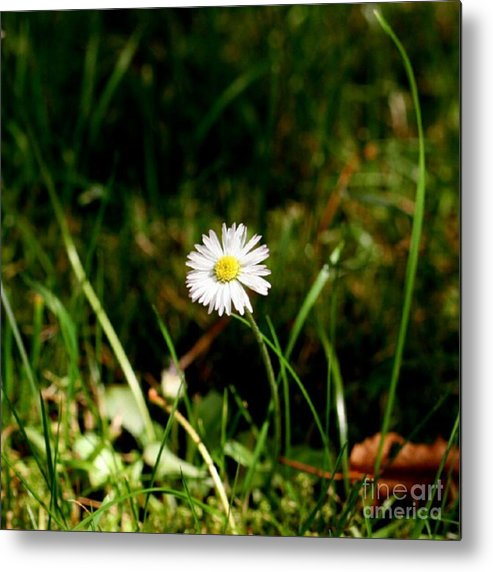 Daisy Metal Print featuring the photograph Daisy Daisy by YoursByShores Isabella Shores