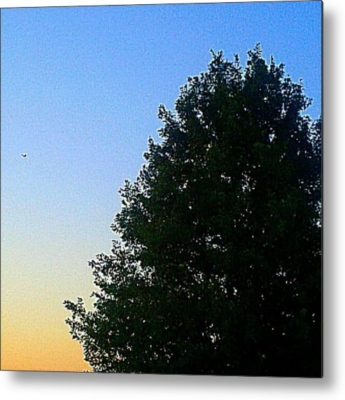 Andrography Metal Print featuring the photograph #instadroid #andrography #nexuss #tree by Kel Hill