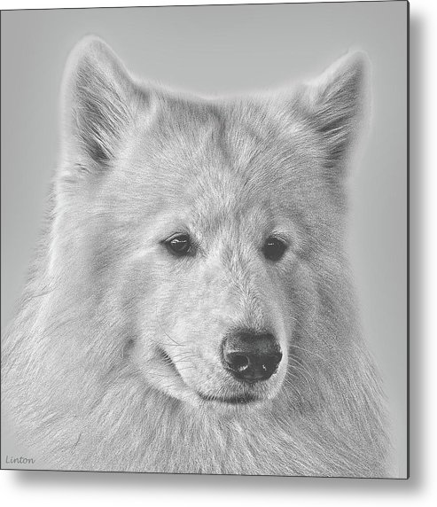 Samoyed Metal Print featuring the digital art Samoyed by Larry Linton