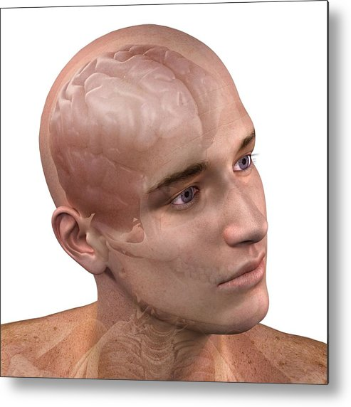 Artwork Metal Print featuring the photograph Head Anatomy, Artwork by Sciepro