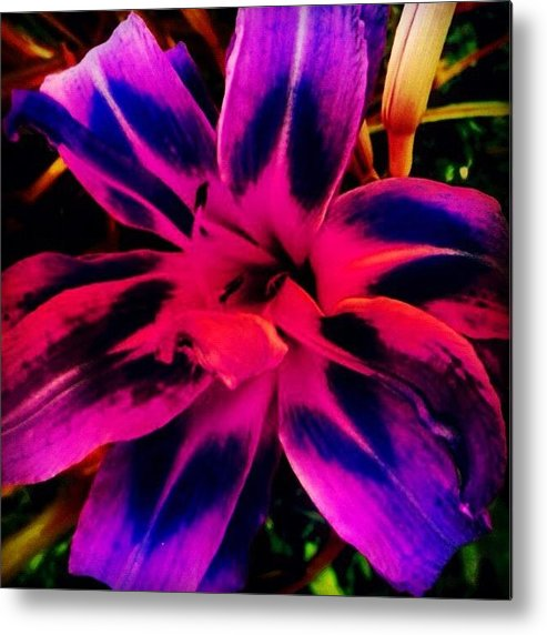Summer Metal Print featuring the photograph Flower by Katie Williams