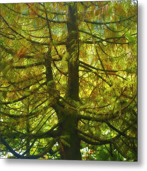Conifer Metal Print featuring the photograph Abstract Foliage by Diana Cox