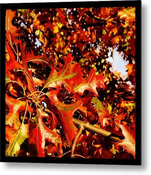 Metal Print featuring the photograph Ahhh Fall. by Mark Valentine